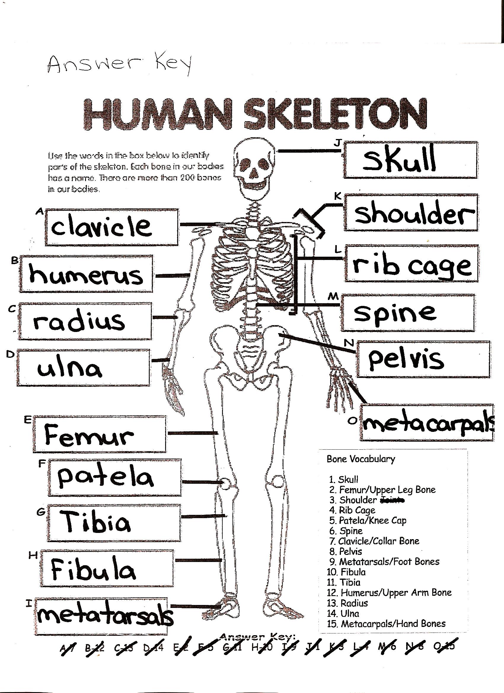 Free Printable Skeleton Crosswords