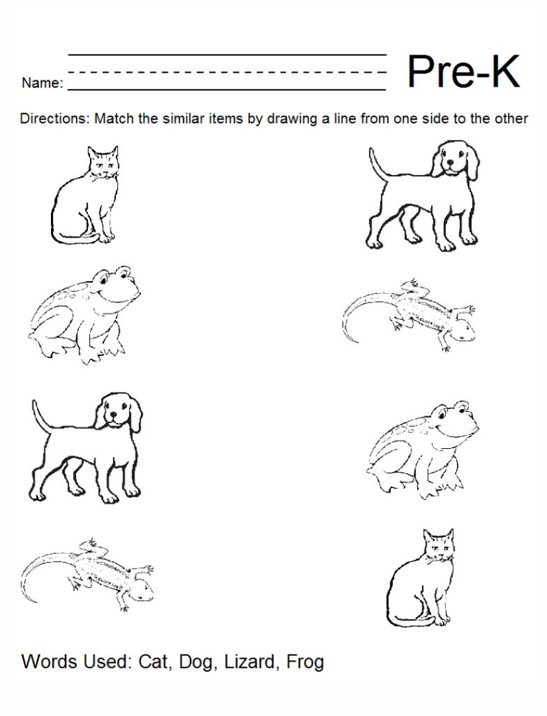 6 Best Pre K Worksheets Packets Printable Printablee