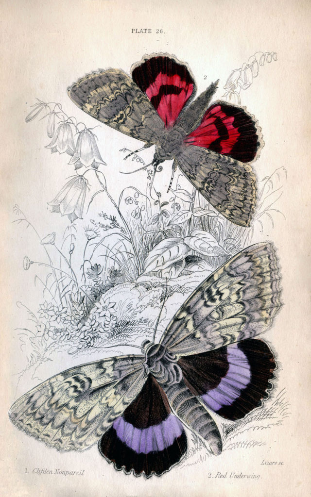 Instant Art Printable Colorful Butterflies Moths The