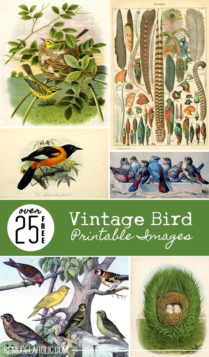 Free Printable Vintage Images
